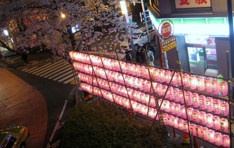 Ciliegi in fiore a Tokyo